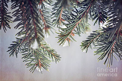 Photograph - Frozen Pine Needles by Sharon McConnell