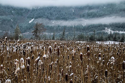 Photograph - Frozen Reeds by Perggals - Stacey Turner