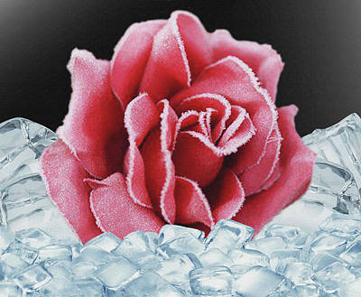 Mixed Media - Frozen Rose by Dennis Buckman