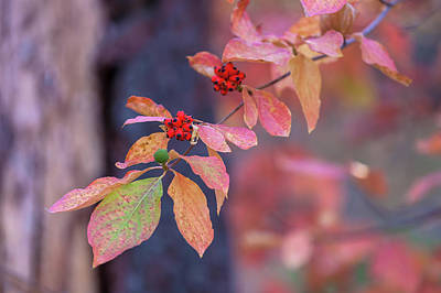 Photograph - Fruit Of The Season by Jonathan Nguyen