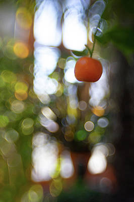 Photograph - Fruity by Brian Hale