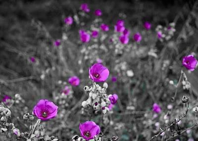 Photograph - Fuchsia Dream Fields by Lynda Anne Williams
