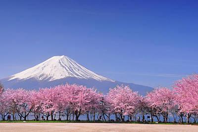 Photograph - Fuji And Sakura by Peerapat Tandavanitj
