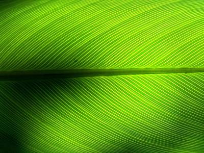Full Frame Shot Of Green Leaf Art Print by Kiyoshi Nasu / Eyeem