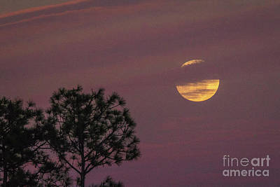 Photograph - Full Moon And Trees by Tom Claud