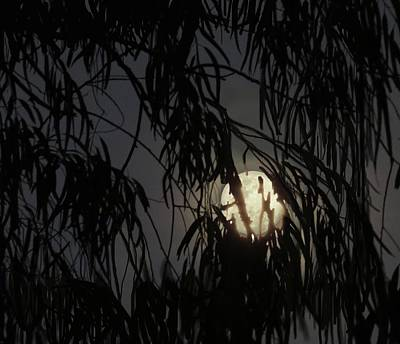 Photograph - Full Moon Gum Tree Leaf Silhouette by Joan Stratton