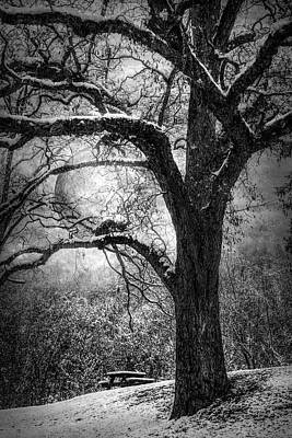 Photograph - Full Moon In The Trees Black And White by Debra and Dave Vanderlaan