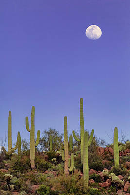 Photograph - Full Moon Over Saguaro National Monument by Rick Furmanek