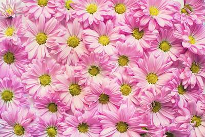 Full Of Pink Flowers Art Print