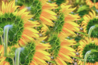 Abstract Flowers Royalty-Free and Rights-Managed Images - Full of sun by Veikko Suikkanen