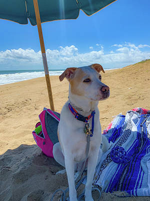 Art Print featuring the photograph Fun Doggie Day At The Beach by Lora J Wilson