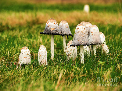 Photograph - Fungi by Jim Orr