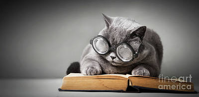 Pittsburgh According To Ron Magnes - Funny cat in big glasses reading book. by Michal Bednarek