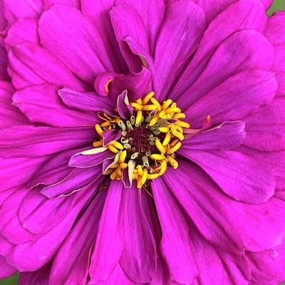Cindy Digital Art - Fuschia Bloom by Cindy Greenstein