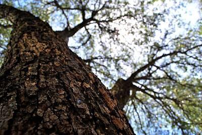 Photograph - Fuzzy Tree Sunlight by Matt Harang