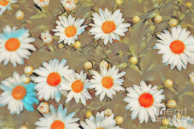 Photograph - Fuzzy White Daisies by Jon Burch Photography