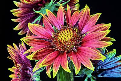 Photograph - Gaillardia Bouquet  by JC Findley