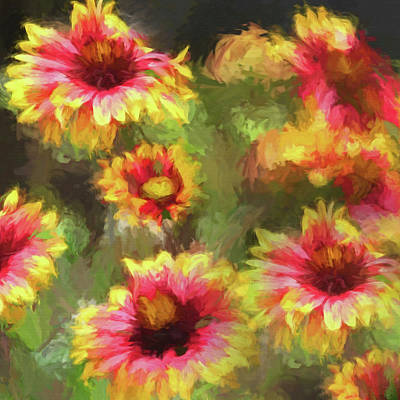 Photograph - Gaillardia Wildflower by HH Photography of Florida