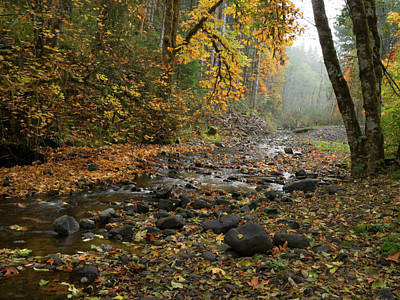 Photograph - Gales Creek Clutter by Jean Noren
