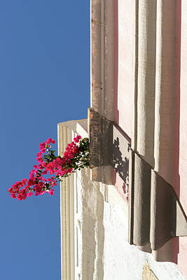 Photograph - Gallivanting In The Tropics - Incongruous Bougainvillea Sprig Between Stuccoed Walls by Georgia Mizuleva