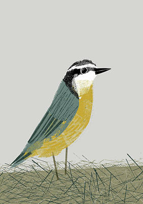 Photograph - Garden Bird Nuthatch by Chris Madden