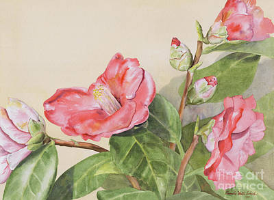 Painting - Garden Camellias by Pamela Schick