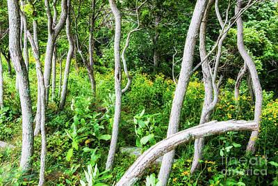 Photograph - Garden Glow In The Blue Ridge by Dan Carmichael