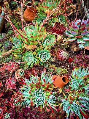 Photograph - Garden Succulents by Garry Gay