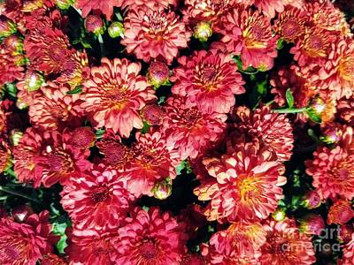 Farm House Style - Garnet Fall Mums by Rachel Hannah