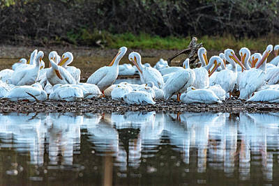Photograph - Gathering For The Evening by Jack Peterson