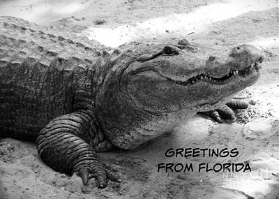 Photograph - Gator Greetings From Florida by Carol Groenen