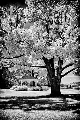 Photograph - Gazebo And Tree by Paul W Faust - Impressions of Light