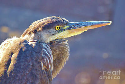 Photograph - Gbh Waiting For Food by Debbie Stahre