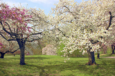 Photograph - April Orchard by Jessica Jenney