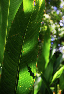 Photograph - Gecko Silouette by Anthony Jones