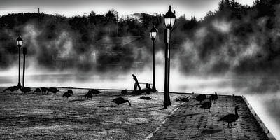 Photograph - Geese In The Mist by David Patterson