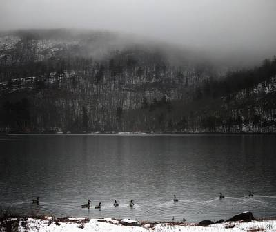 Photograph - Geese On Mirror Lake by John Meader