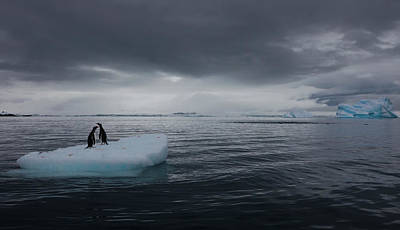 Trapped Photograph - Gentoo Penguins On An Iceberg by Mint Images - Art Wolfe