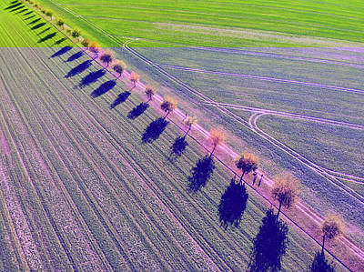 Photograph - Geometric Landscape 11 Row Of Trees And Green Fields by Matthias Hauser