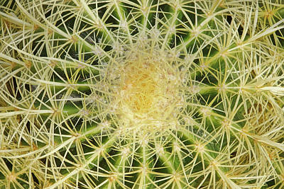 Photograph - Geometry Of Spines I by Leda Robertson