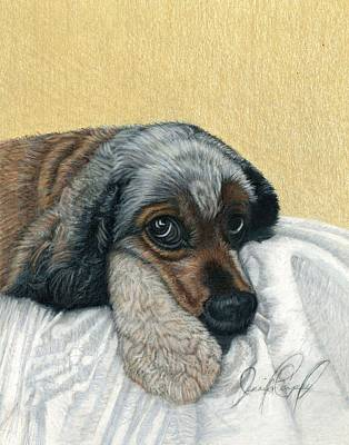 Cocker Spaniel Drawing - George by Jennifer Campbell Brewer