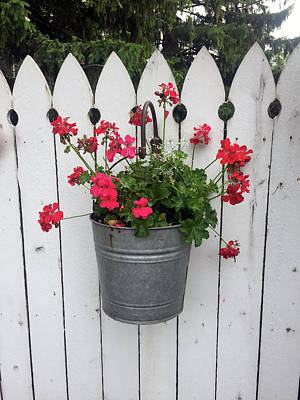 Photograph - Geranium Gate by Peg Toliver