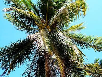 Claude Monet - Get that Coconut by Dietmar Scherf
