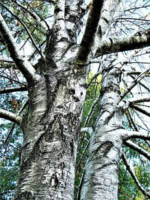 Photograph - Ghost Tree by Diane Chandler