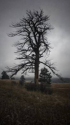 Photograph - Ghostly Snag by Dan Miller