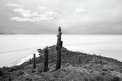 Photograph - Giant Cacti On Isla Incahuasi, Bolivia by Aidan Moran