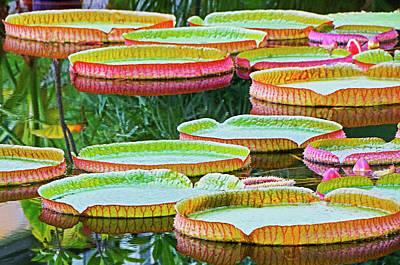Studio Grafika Zodiac - Giant Lilly Pads by Dennis Cox Photo Explorer