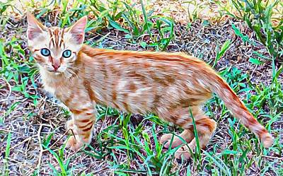 Photograph - Ginger Blue Eyed Kitty by Dorothy Berry-Lound