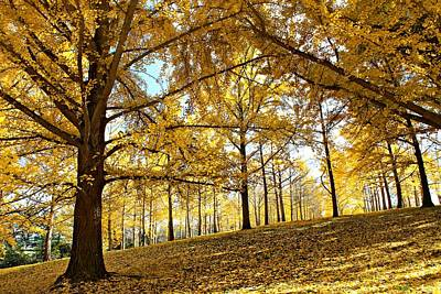 Photograph - Ginkgo Grove by Candice Trimble