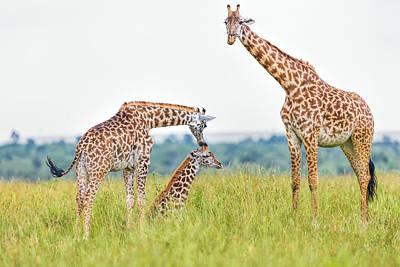 Giraffe Family Art Print by 1001slide